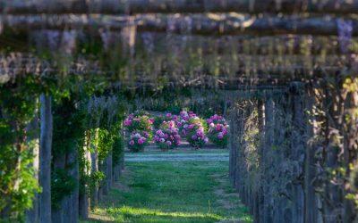 Scopri con noi i Giardini dell'Alto Lazio